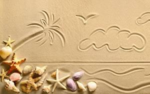 Fotos Muscheln Sand Palmengewächse Wolke