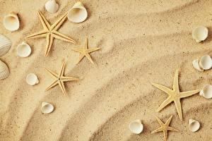 Fotos Muscheln Seesterne Sand