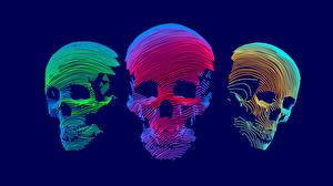 Fotos Cranium Vektorgrafik Drei 3