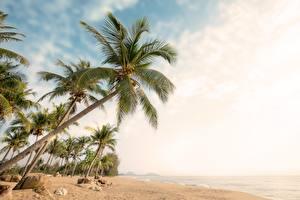 Fondos de Pantalla Cielo Arecaceae Playa árboles Naturaleza imágenes