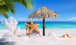 Fotos Seesterne Muscheln Strand Sand Sonnenliege Regenschirm