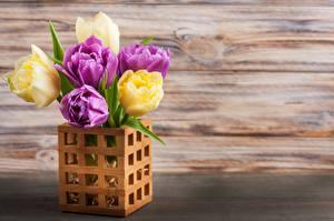 Bilder Tulpen Vase