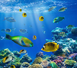 Fonds d'écran Monde sous-marin Poisson Corail