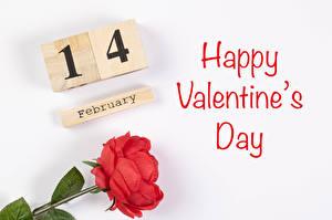 Tapety na pulpit Walentynki Róża Na białym tle Angielskie Napis Czerwony kwiat