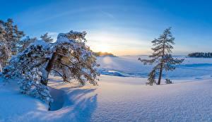 Photo Winter Finland Morning Trees Snow Kotka-Hamina Nature