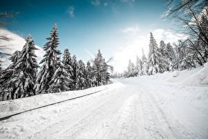 Fotos Winter Straße Schnee Bäume Natur