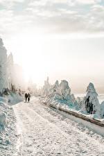 Bilder Winter Wege Schnee 2 Geht Bäume Natur