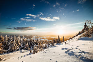 Pictures Winter Scenery Forests Sky Snow Spruce Trees Nature