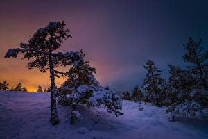 Picture Winter Sunrise and sunset Evening Finland Snow Trees Southwest Finland Nature