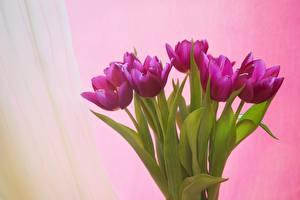 Hintergrundbilder Blumensträuße Tulpen Farbigen hintergrund Blumen