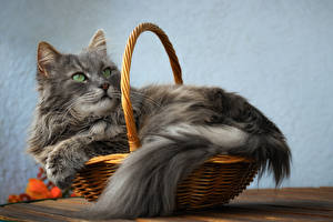 Hintergrundbilder Katze Weidenkorb Blick Graues