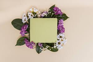 Fotos Chrysanthemen Farbigen hintergrund Vorlage Grußkarte Blatt Papier Blüte