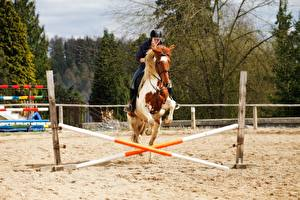 Pictures Equestrian sport  Horse Sand Jump sports Girls