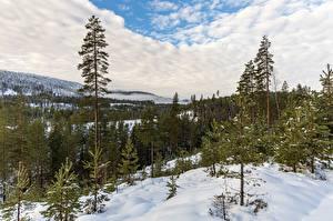 Bilder Wald Norwegen Wolke Schnee Bäume Kongsberg Natur