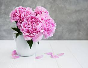 Pictures Peonies Vase Pink color Flowers