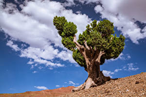 Pictures Sky Morocco Africa Clouds Trees Tadla-Azilal Nature