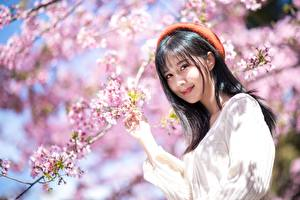 Bilder Frühling Blühende Bäume Asiatische Ast Brünette Süßes Lächeln Starren Barett junge frau Natur