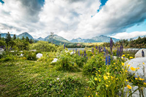 Photo Stones Lupinus Scenery Mountain Slovenia Grass Tatra mountains