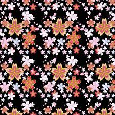 Bilder Textur Schwarzer Hintergrund Blüte