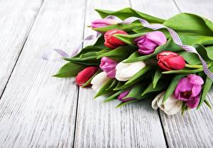 Fotos Tulpen Sträuße Bretter Blumen