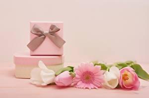 Fotos Tulpen Internationaler Frauentag Gerbera Farbigen hintergrund Geschenke Schleife Schachtel Blüte