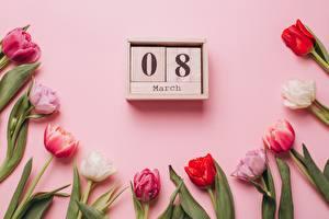 Hintergrundbilder Tulpen Internationaler Frauentag Rosa Farbe Kalender Rosa Hintergrund Blüte