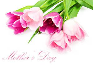 Hintergrundbilder Tulpen Muttertag Weißer hintergrund Englischer Text Blüte