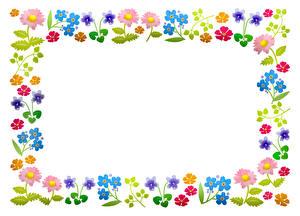 Bilder Weißer hintergrund Mehrfarbige Vorlage Grußkarte Blumen