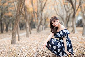 Wallpaper Asian Bokeh Trees Foliage Gown Brown haired Glance Sitting female