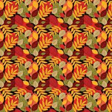 Bilder Herbst Textur Blatt