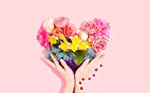 Pictures Bouquet Hands Heart Pink color Pink background flower