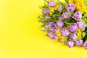 Hintergrundbilder Blumensträuße Falsche Mimose Tulpen Farbigen hintergrund Blüte