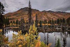 Bilder Kanada Parks Berg See Herbst Banff Fichten Natur