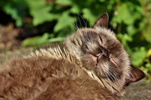 Images Cat Fluffy Esting Sleep Snout animal