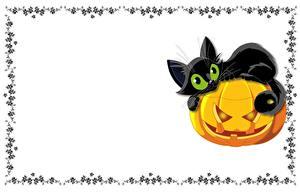 Hintergrundbilder Hauskatze Kürbisse Vorlage Grußkarte ein Tier