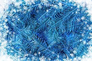 Bilder Neujahr Ast Schneeflocken