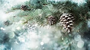 Pictures New year Conifer cone Snow Branches