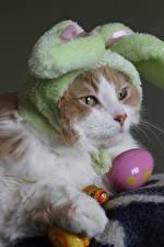 Fotos Ostern Katze Ei Schnauze Mütze Tiere