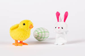 Pictures Easter Rabbit Chicks Gray background Egg