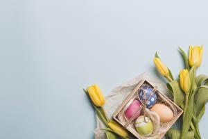 Sfondi desktop Pasqua Tulipa Sfondo grigio Giallo Uovo Modello biglietto di auguri fiore Fiori
