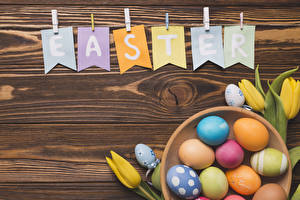Wallpaper Easter Tulip Boards Lettering English Egg Multicolor Food Flowers