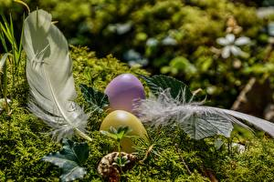 Wallpaper Feathers Easter Moss Egg
