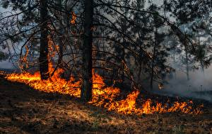 Picture Forests Fire Grass Trees wildfire Nature