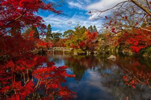 Hintergrundbilder Kyōto Japan Parks Fluss Brücke