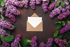 Images Lilac Spring Letter message Template greeting card Flower Flowers