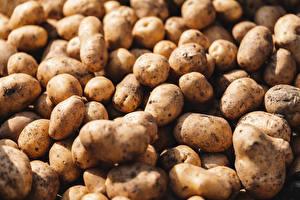 Fotos Kartoffel Hautnah Viel