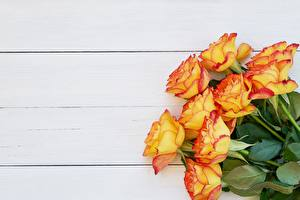 Image Rose Bouquet Boards Orange Yellow flower