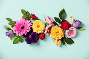 Image Rose Tulip Gerbera Colored background