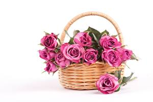 Wallpapers Rose White background Wicker basket Pink color flower