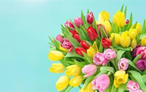 Fotos Tulpen Blumensträuße Farbigen hintergrund Bunte Blüte
